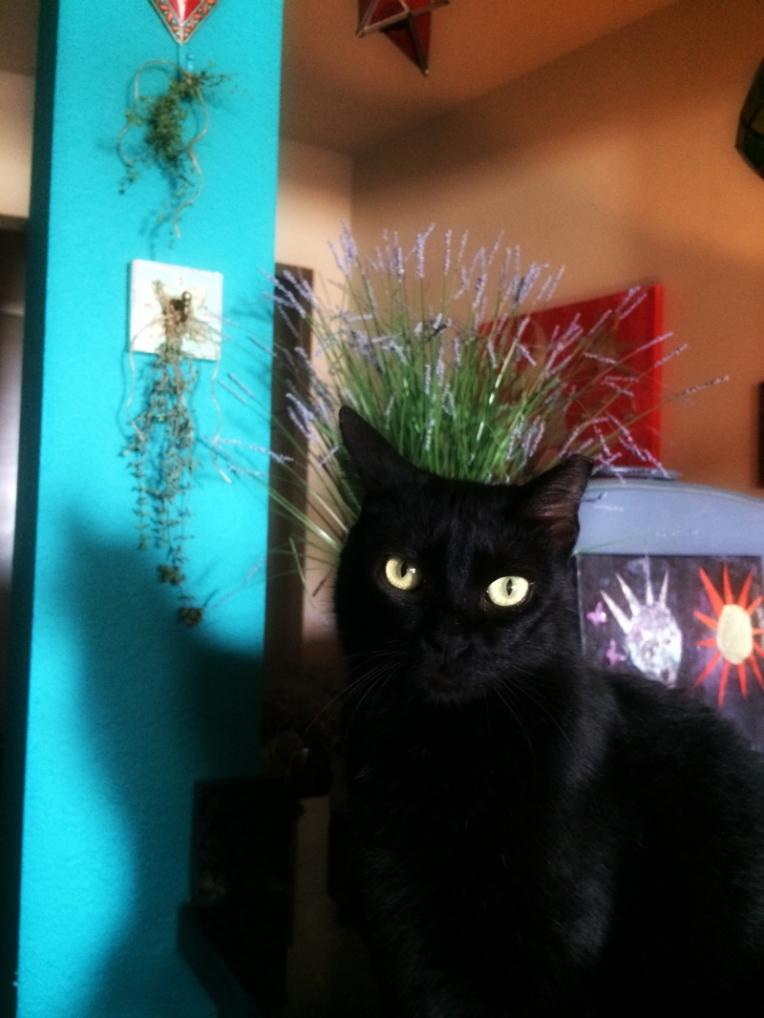 catsherbsx